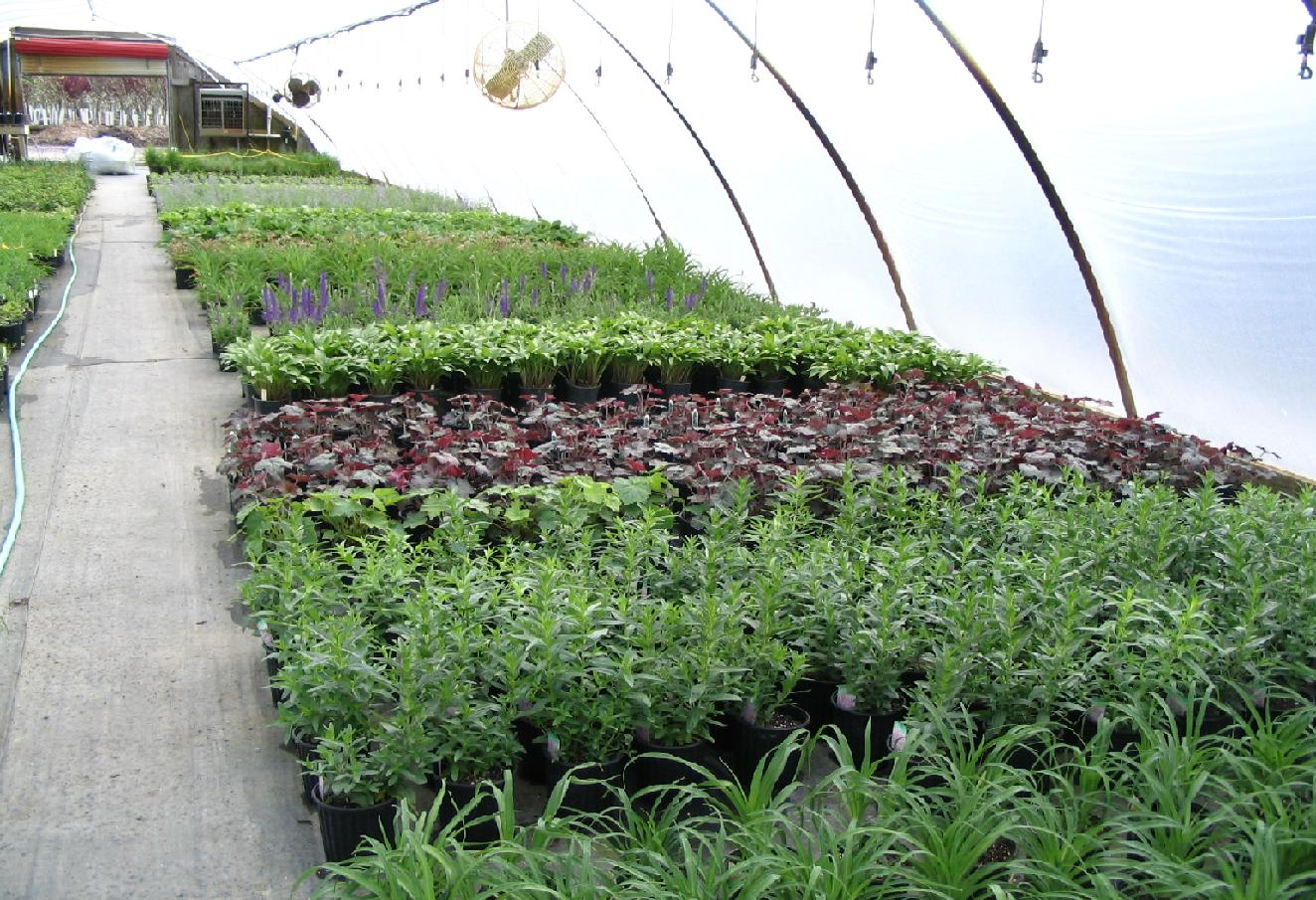 As Time Progressed Marshall Trees Nursery Began To Grow And The Product Mix Quickly Changed From Primarily Evergreens Shade Ornamental